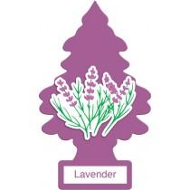 Car- Pino U.s.a Lavender